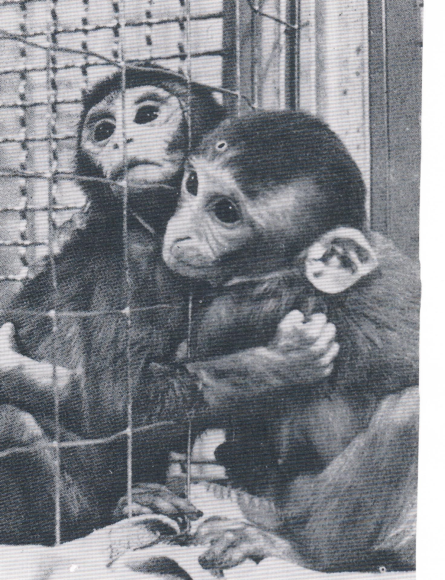 monkeys-animal-aid
