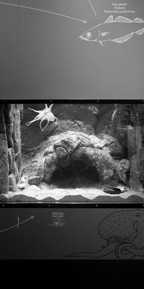 Visiting Octopus