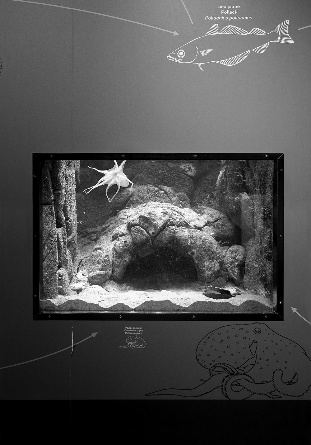 4. The Octopus in her/his Tank